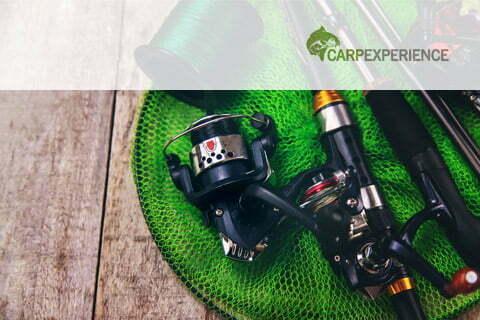 Carp Experience